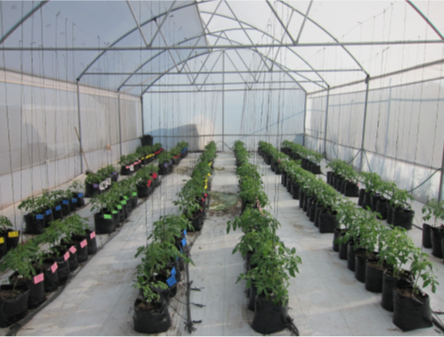 Extraction of invariant visual information in greenhouses